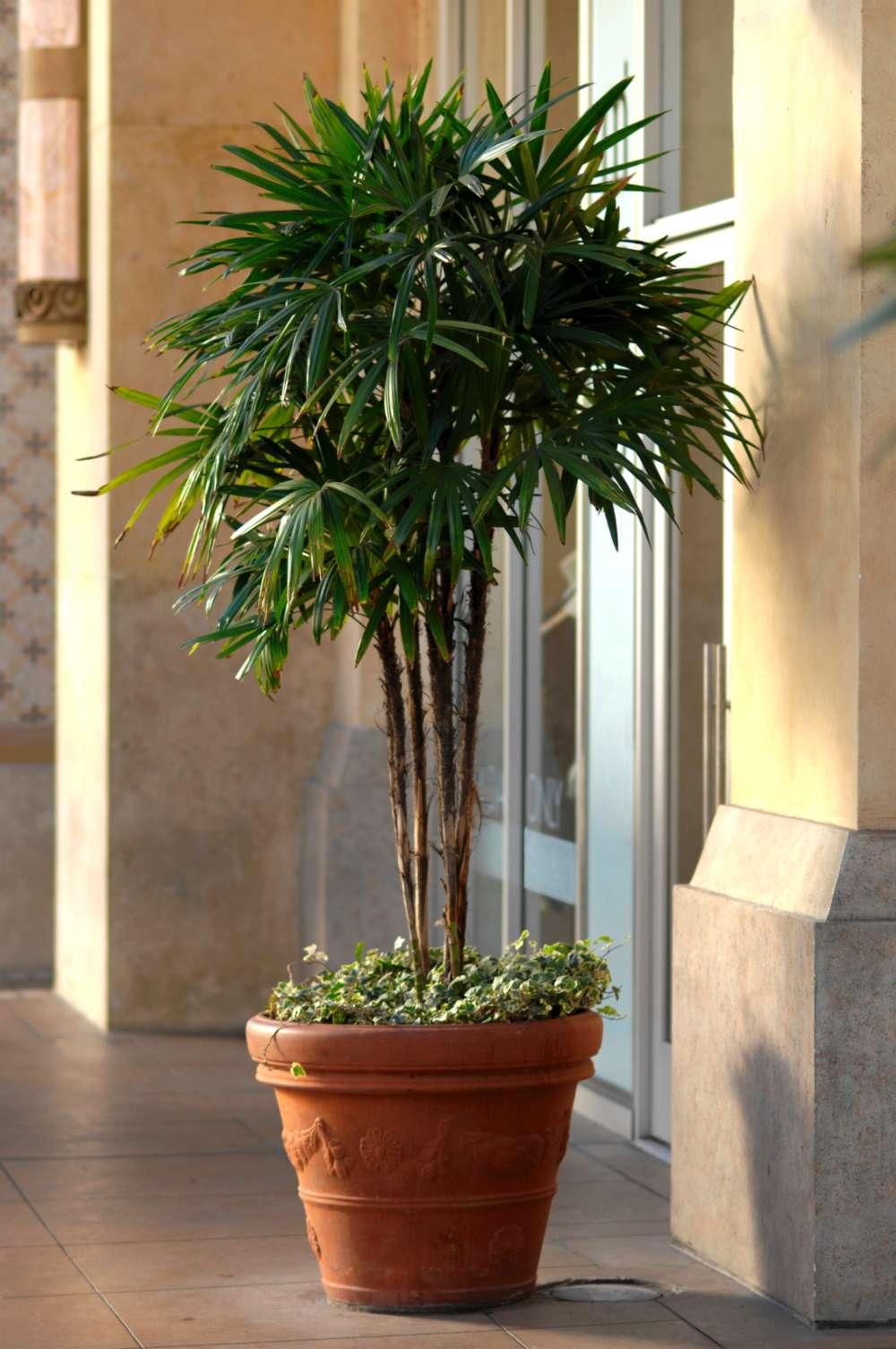 Ordinaire Bar Furniture Patio Palm Tree Patio Palm Tree Reeds Patio Palm Pertaining  To Measurements 1000 X