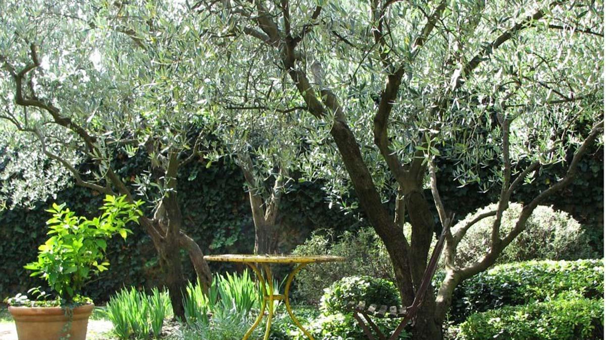 Patio Shade Trees Zone 5 Ideas