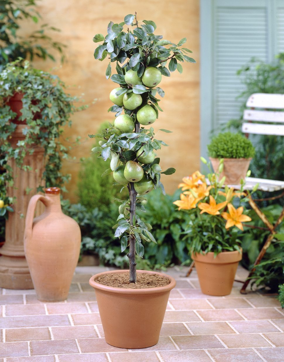Charmant Patio Patio Trees Simple Potted For From Visi On Home Design Ideas  Regarding Measurements 970 X