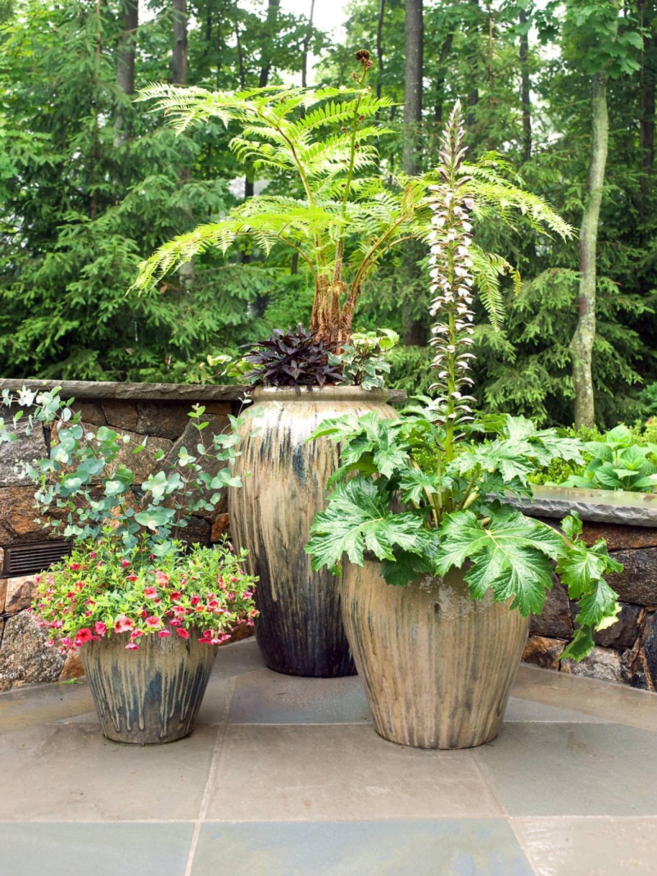 Patio Trees Unique Pot Trees And Plants For Patio 94 Cool Ideas For In  Sizing 1280