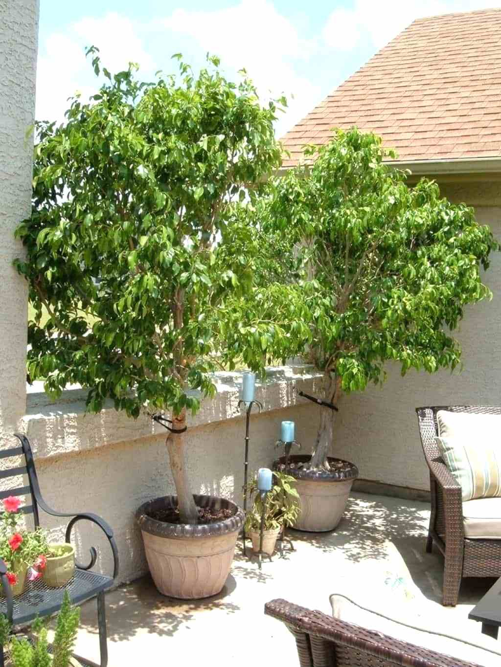 Genial Pictures Outdoor Potted Trees Diy Home Design Furniture For Measurements  1024 X 1364