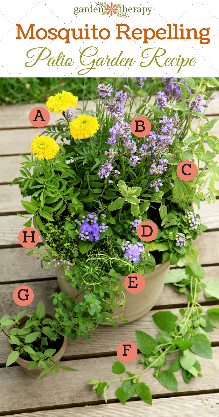 Plant A Mosquito Repelling Container Garden To Protect Entertaining regarding size 735 X 1400