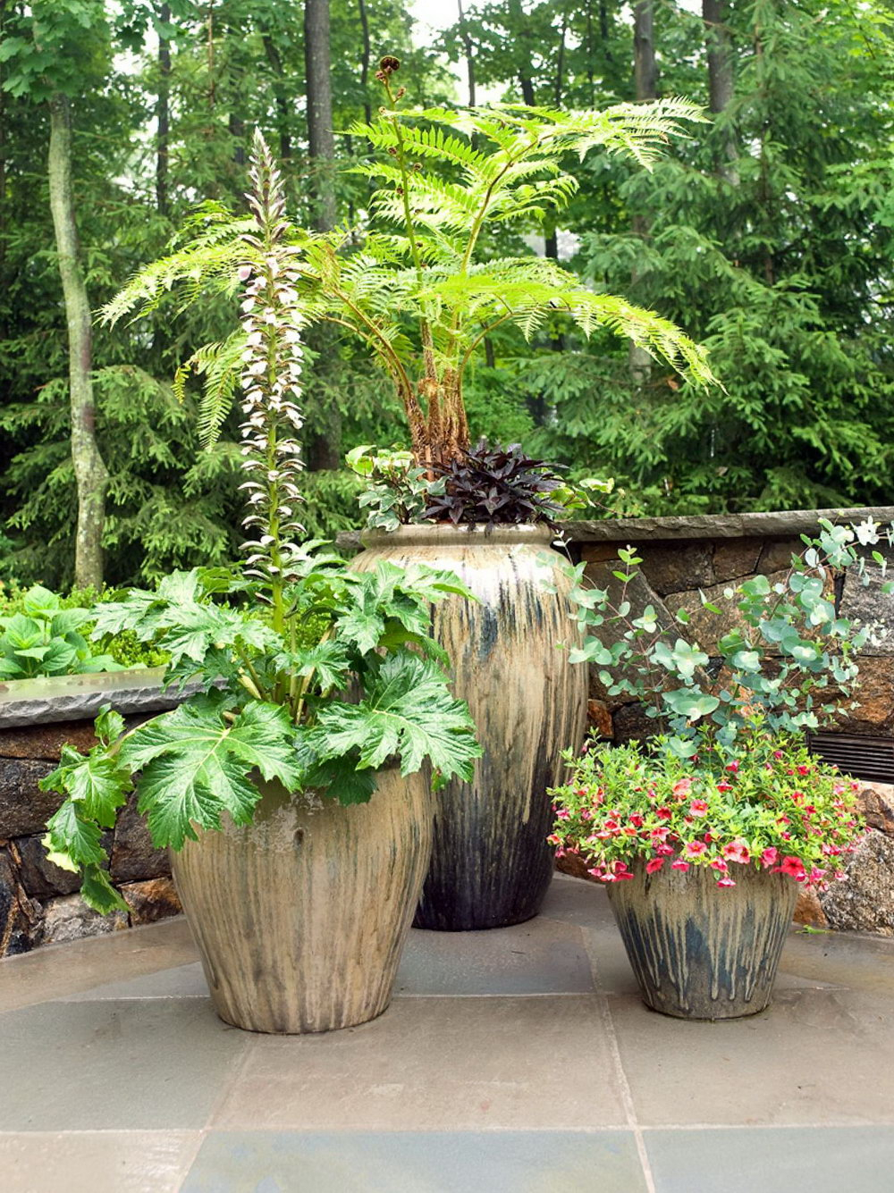 Tall Potted Plants For Patio Home Design Ideas Trees Sizing 1000 X 1335